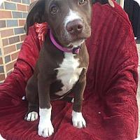 Adopt A Pet :: Coco - Lompoc, CA