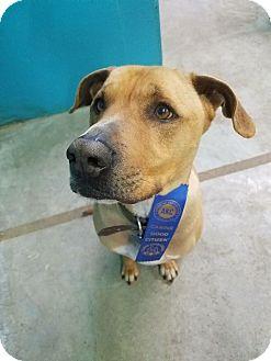 Labrador Retriever/Mountain Cur Mix Dog for adoption in Kansas City, Missouri - Keeper