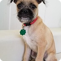 Adopt A Pet :: Jeckyl - San Francisco, CA