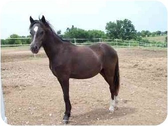 Pony - Other Mix for adoption in Nowata, Oklahoma - Molly