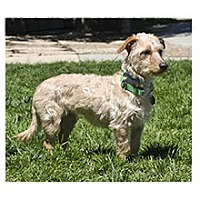 Adopt A Pet :: Minnie - Santa Barbara, CA