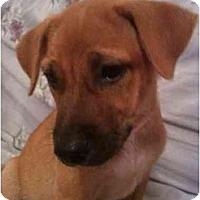 Adopt A Pet :: Sandy - Arlington, TX