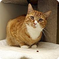 Adopt A Pet :: Willie - Halifax, NS