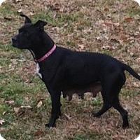 Adopt A Pet :: Ella - Geismar, LA