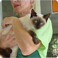 Adopt A Pet :: Tommie & Mitzi - Arlington, VA