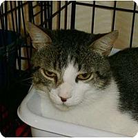 Adopt A Pet :: Otto - lake elsinore, CA