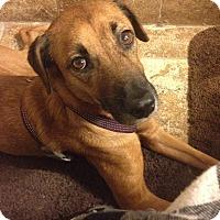 Adopt A Pet :: Lovely Lucero - Madison, NJ