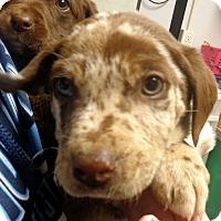 Adopt A Pet :: Rascal - Greencastle, NC