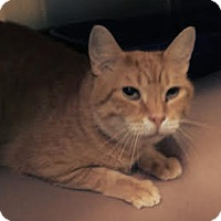 Adopt A Pet :: Bob Dole - Richboro, PA