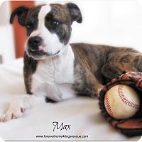 Adopt A Pet :: Max - Pascagoula, MS