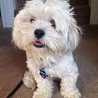 Adopt A Pet :: Sherlock D5098 - Fremont, CA