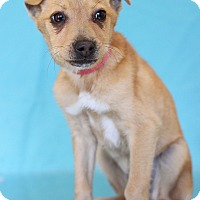 Adopt A Pet :: Peaches - Waldorf, MD