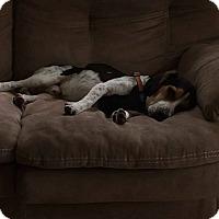 Adopt A Pet :: Walter(Owen) - cicero, NY