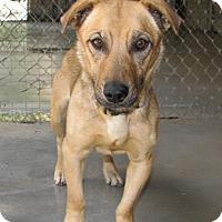 Adopt A Pet :: Macy - Ruidoso, NM