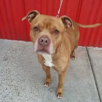 Adopt A Pet :: Ruka - Camano Island, WA
