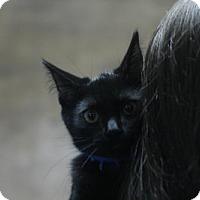 Adopt A Pet :: Jaxon - Blue Collar - Lancaster, PA
