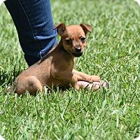 Adopt A Pet :: colt - Groton, MA