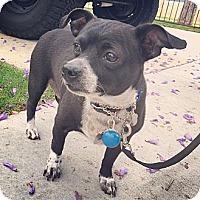 Adopt A Pet :: Zach *COURTESTY LISTING - Los Angeles, CA