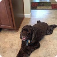 Adopt A Pet :: Cash 8yr - Mentor, OH