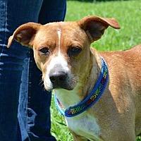 Adopt A Pet :: Nancy Drew - Brownsboro, AL