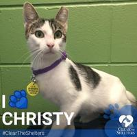 Adopt A Pet :: Christy - Grapevine, TX