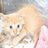 Adopt A Pet :: A455873 - Salt Lake City, UT