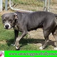 Adopt A Pet :: GG - Pensacola, FL