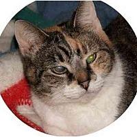 Adopt A Pet :: Aggie - Milford, OH