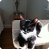 Adopt A Pet :: Mickey - Jenkintown, PA