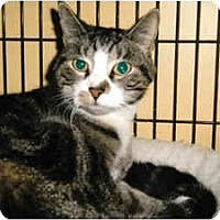 Adopt A Pet :: Ozzy - Medway, MA
