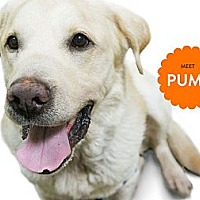 Adopt A Pet :: PUMA - Temple City, CA