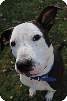 Pit Bull Terrier Mix Dog for adoption in Manchester, New Hampshire - CHANCE
