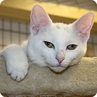 Adopt A Pet :: LOTS OF KITTENS - Seville, OH
