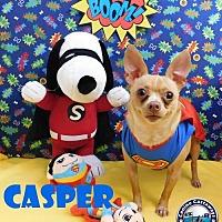 Adopt A Pet :: Casper - Arcadia, FL