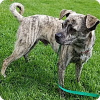 Adopt A Pet :: Roger - Los Angeles, CA