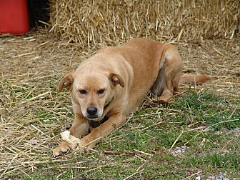 Mixed Breed (Medium) Mix Dog for adoption in Spring Valley, New York - ivory