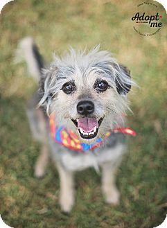 Terrier (Unknown Type, Medium) Mix Dog for adoption in Kingwood, Texas - Carlitos