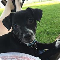 Adopt A Pet :: Lito - Troy, MI