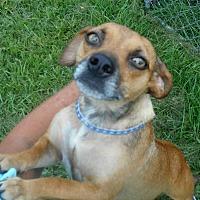 Adopt A Pet :: Cayenne - Allentown, NJ