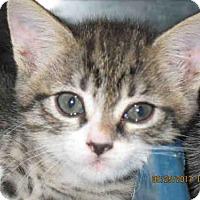 Adopt A Pet :: TINY - Lathrop, CA