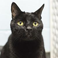 Adopt A Pet :: Jack - Whitehall, PA