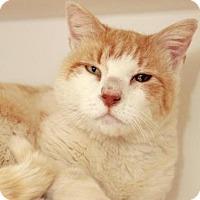 Adopt A Pet :: *SAMSON - Camarillo, CA