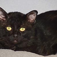 Adopt A Pet :: Blackie - Des Moines, IA