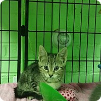 Adopt A Pet :: Jeremiah - Bloomingdale, NJ