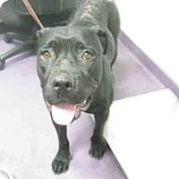 Adopt A Pet :: Matilda A591444 @ Long Beach A - Beverly Hills, CA