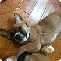 Adopt A Pet :: Hemlock - Plainfield, IL