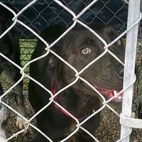 Adopt A Pet :: Lucy - Opelousas, LA