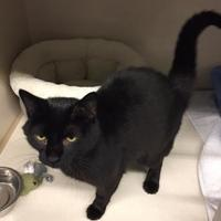 Adopt A Pet :: Tazz - Thunder Bay, ON