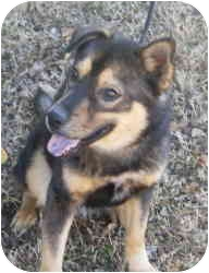 Husky Mix Dog for adoption in kennebunkport, Maine - Stormy - Pending!
