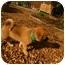 Photo 2 - Collie Mix Puppy for adoption in Glastonbury, Connecticut - Paddington